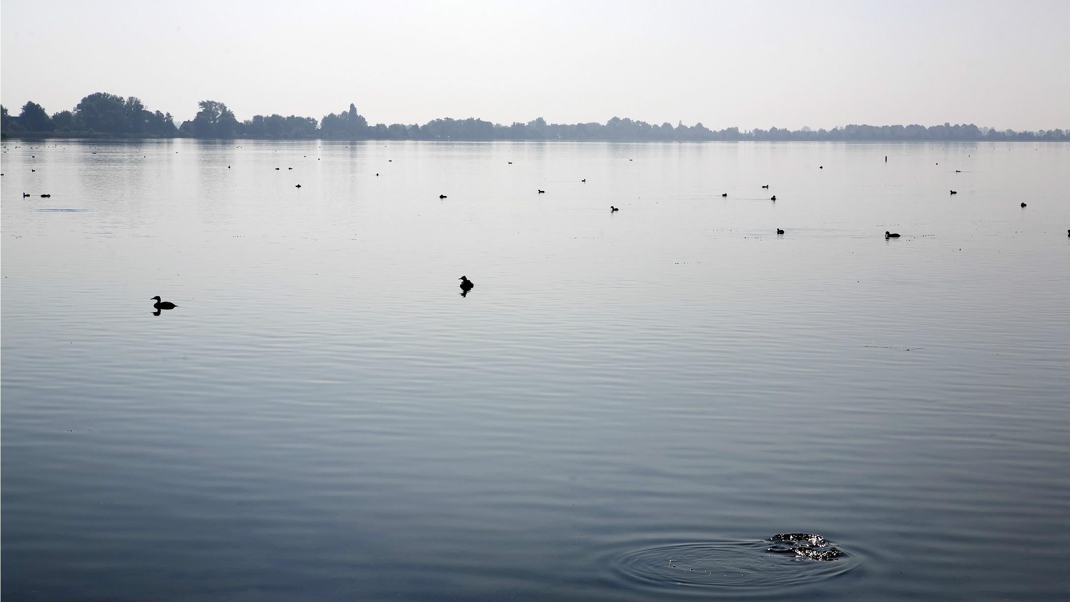 Bevuild oppervlaktewater bodem bezaaid met ongedierte foto van
